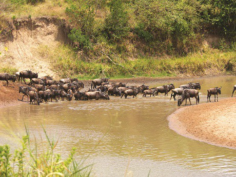 masai-mara-migration-tour