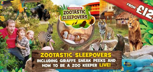zootastic sleepover at chesington