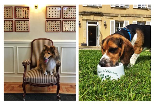 Dog Friendly Hotel