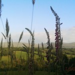 remote holiday cottage brecon beacons